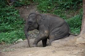 lazy elephant